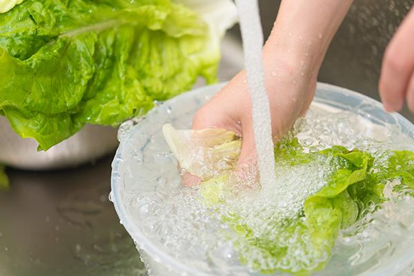 白菜を水洗い